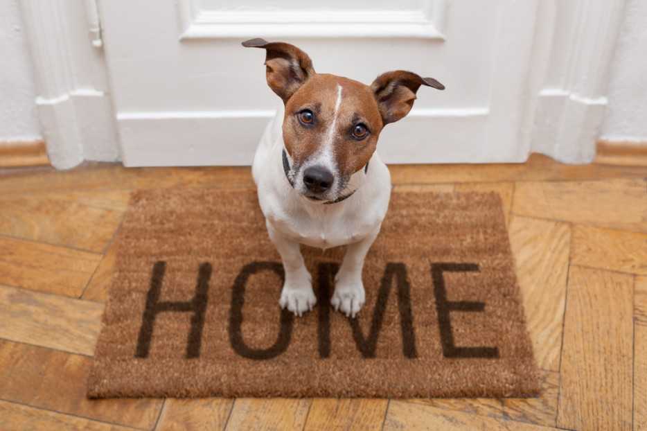 Как снять квартиру с животными?